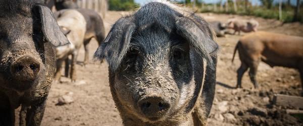Tierelend – Die Beseitigung der Individuellen Freiheit ist keine Lösung